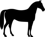 horse-156496_640